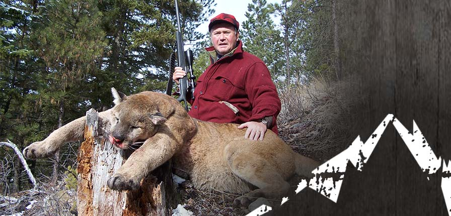 Montana Cougar Hunting Mountain Lion Snowmobile Hunts In Mt