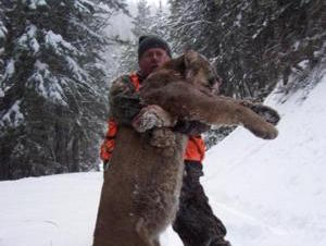 Mountain Lion Hunting